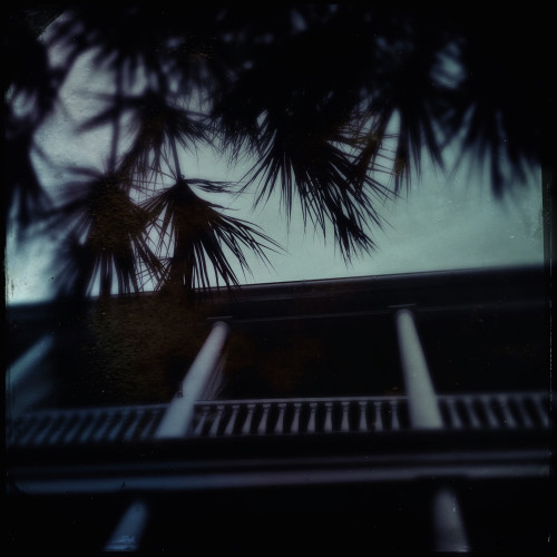 Palms and Balcony
