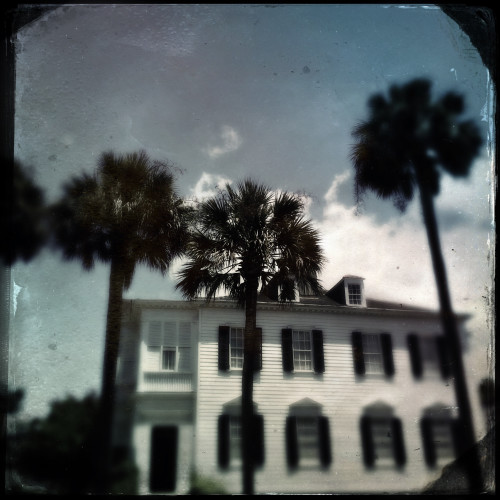 House and Palms
